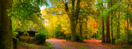 Paesaggio autunnale colorato e tranquillo: un panorama di una foresta con sentieri coperti di foglie e una piccola cabina