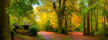 paisaje de otoño colorido y tranquilo: un panorama de un bosque con caminos cubiertos de hojas y una pequeña cabina