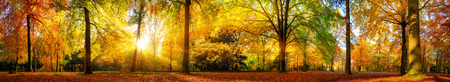 Extra wide panorama of a gorgeous forest in autumn, a scenic landscape with pleasant warm sunshine