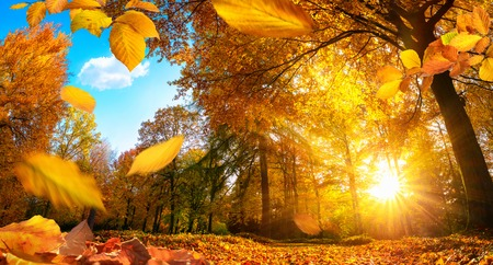 Golden autumn scene in a park, with falling leaves, the sun shining through the trees and blue sky Standard-Bild