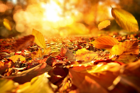 dode bladeren: Levendige close-up van dalende de herfstbladeren met levendige backlight van de zon Stockfoto
