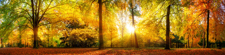 forest trees: Panorama of a stunning forest scenery in autumn, a scenic landscape with pleasant warm sunshine