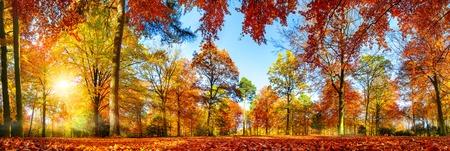 Panorama barevných stromů v parku na podzim, živá krajina se sluncem svítícím skrze listy