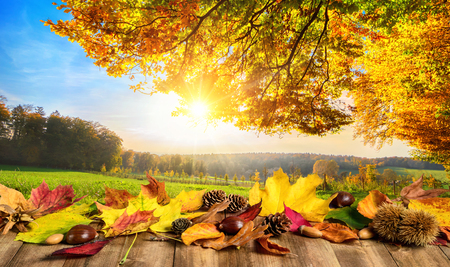 Autumn concept with colorful leaves on a wooden table in front of a sunny open landscape Stock Photo