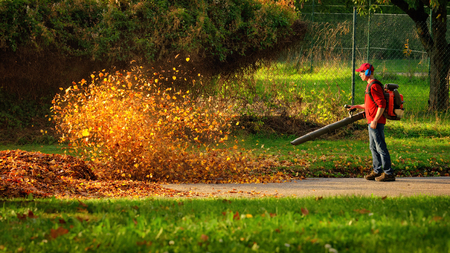 Man operating a heavy duty leaf blower: the leaves are being swirled up and glow in the pleasant sunlight