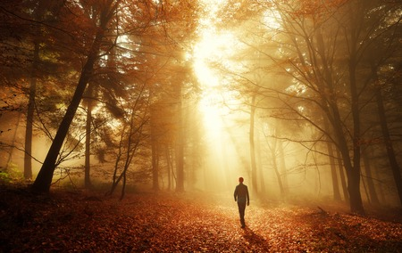 Male hiker walking into the bright gold rays of light in the autumn forest, landscape shot with amazing dramatic lighting mood 写真素材