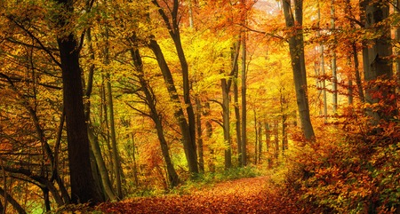 Autumn forest scenery with warm colors and a footpath covered in leaves leading into the scene Stock Photo
