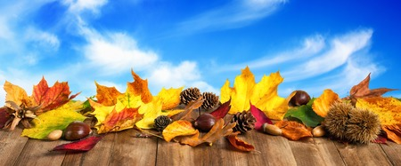 Colorful autumn leaves, cones and chestnuts on wooden surface, with nice blue sky and white clouds in the background