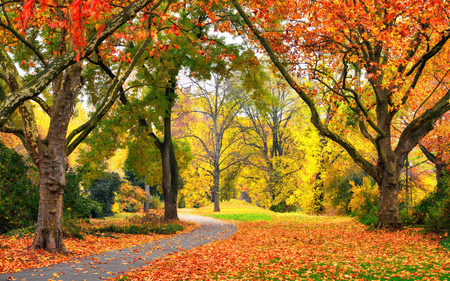 Autumn scenery in a park with warm colors, leaves on the lawn and a footpath leading into the scene