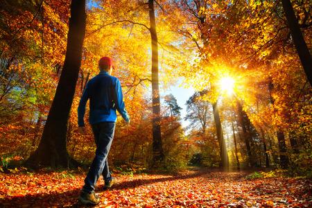 Mannelijke wandelaar die naar de heldergouden stralen van zonlicht loopt in het herfstbos