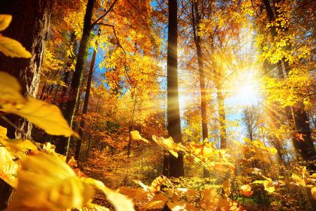 Wunderschöne Herbstlandschaft in einem Wald, mit der Sonne, die schöne Lichtstrahlen durch das gelbe Laub wirft Standard-Bild - 65438214