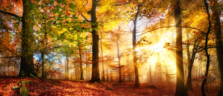 Rays of gold sunlight in a misty forest with warm vibrant colors in autumn