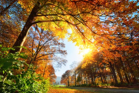 Autumn scenery with deciduous trees in a park and the sun warmly illuminating the foliage