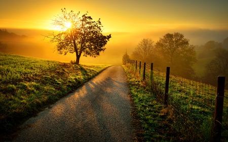 Idyllische ländliche Landschaft auf einem Hügel mit einem Baum auf einer Wiese bei Sonnenaufgang, führt ein Weg in das warme Goldlicht