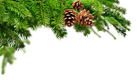 Tannenzweig in frischem Grün mit Zapfen, Studio gedreht auf reinen weißen Exemplar Hintergrund