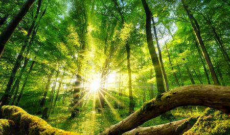 Ruhige Landschaft in einem grünen Wald, mit der Sonne Casting Lichtstrahlen durch die Bäume bezaubernden Standard-Bild - 72482405