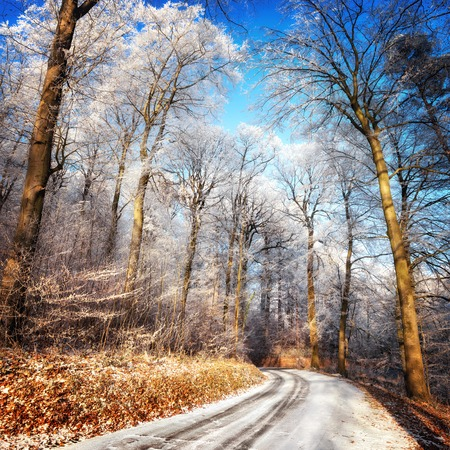 Scenic forest road in winter, with snow and hoarfrost on the trees and clear blue sky