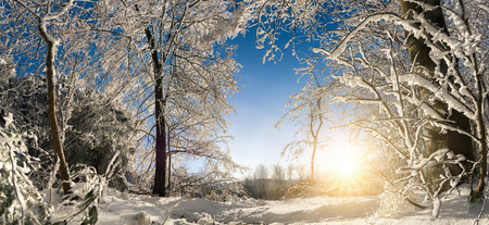 Scenic winter wonderland panorama with the sun, snow on trees and clear blue sky