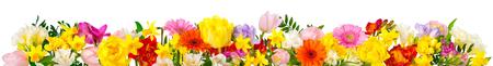 Bloemen in vrolijke kleuren, studio geïsoleerd op wit, in banner-formaat of als een seizoensgebonden natuurlijke rand voor lente en zomer