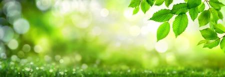 Les feuilles de hêtre vert sur un fond de nature panoramique naturelle avec des points forts de bokeh