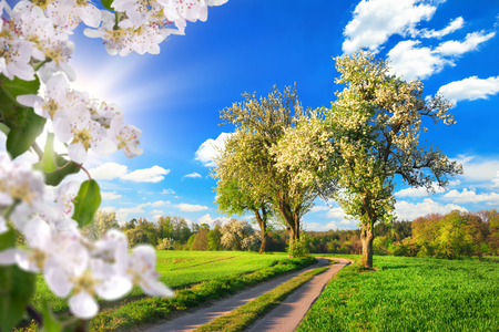 Idyllic rural landscape in spring: green meadow, blossoming trees, blue sky and rays of sunlight, framed with white blossoms
