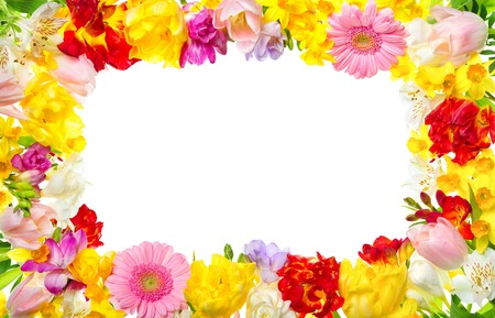 Frame of colorful spring flowers with white background, a very happy and refreshing decoration for your text or design
