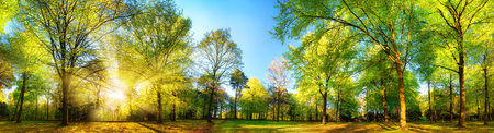 Gorgeous panoramic spring scenery with the sun beautifully illuminating the fresh green foliage Reklamní fotografie