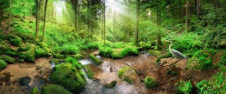 Betoverend panoramisch boslandschap met zacht licht dat door het blad loopt, een stroom met rustig water en een reiger Stockfoto