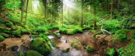 Encantador paisaje de bosque panorámico con suave luz cayendo a través del follaje, un arroyo con agua tranquila y una garza Foto de archivo