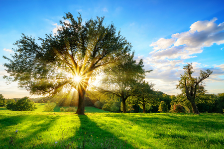 The sun shining through a tree on a green meadow, a vibrant rural landscape with blue sky before sunset Reklamní fotografie