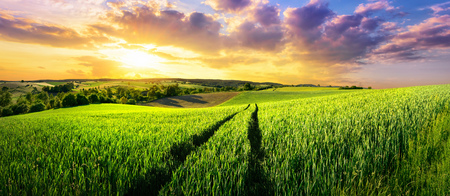 Vast green field at gorgeous sunset, a colorful panoramic landscape