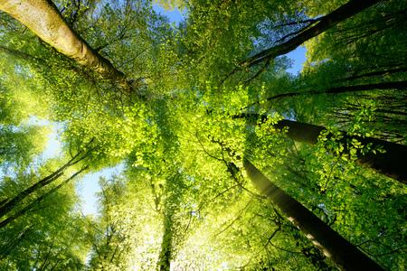 Stralen van zonlicht vallen door een bomenkaap creëren een betoverende sfeer in een vers groen bos Stockfoto