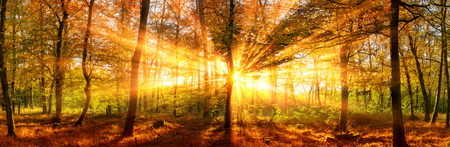 Il paesaggio panoramico della foresta di autunno ha sparato con i raggi di sole vivi dell'oro che cadono attraverso gli alberi Archivio Fotografico - 86579407