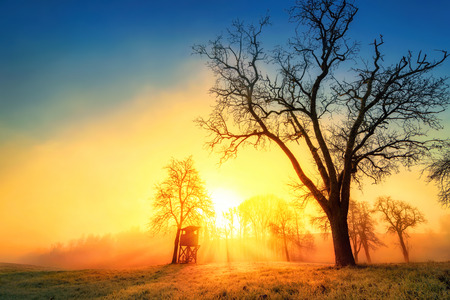 Colorful dramatic sunrise in idyllic rural landscape with tree silhouettes and wafts of morning mist Imagens