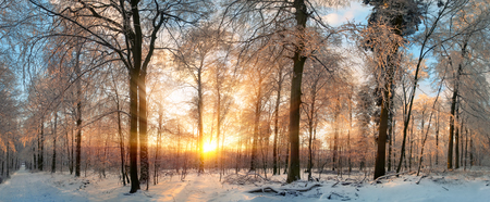 Panoramic witner lanscape at sunset, with gold rays of light illumining the snow covered trees Imagens