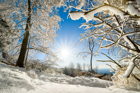 Scenic winter landscape with the sun, snow on trees and clear blue sky