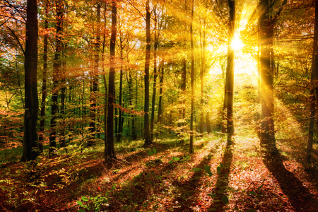 The sun creating a composition of light and shadows in the forest in autumn
