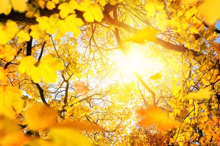 The sun framed by yellow foliage in autumn, shot through the branches of a deciduous tree