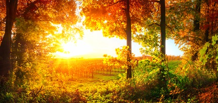 Sunset panorama on a rural landscape, framed by trees and a vineyard, autumn colors