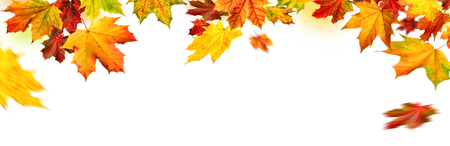 Elegant autumn maple leaves border, studio isolated on pure white background, wide panorama format