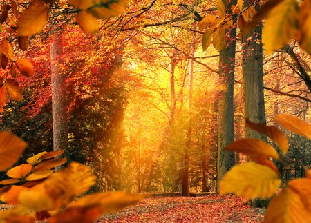 Forest in autumn, gold light falling into a misty clearing and creating a beautiful mood