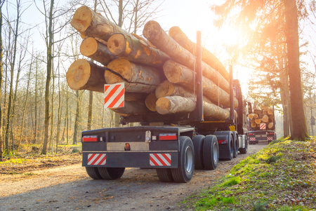 Forestry activity: large trucks transporting tree trunks through a forest, backlit shot with the sun