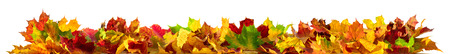 Autumn leaves on the ground as a border, panorama format with vibrant colors isolated on white