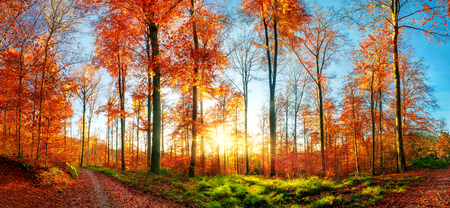 Panoramic autumn landscape at sunset, with colorful trees, blue sky, a forest path, green grass and the sun Imagens