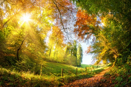 Colorful autumn landscape with a path leading out of a forest onto open meadows, with the sun shining through the foliage