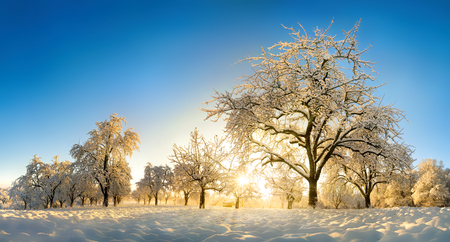Rural landscape enchanted by snow and the gold winter sun rising on the blue sky