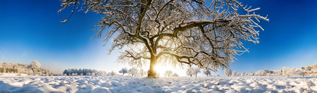 Magnificent panoramic winter scenery with the sun shining under a large tree on a field in snow and clear blue sky Imagens