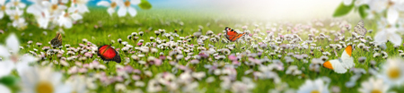 Dreamland landscape with a meadow covered by spring flowers and butterflies flying towards the sun, extra wide panoramic format