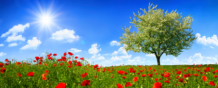 Blossoming lone tree on a colorful meadow with poppy flowers, with the sun shining bright in the deep blue sky