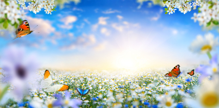 Dreamland fantasy landscape with a meadow covered by spring flowers and butterflies flying towards the sun in the blue morning sky Imagens